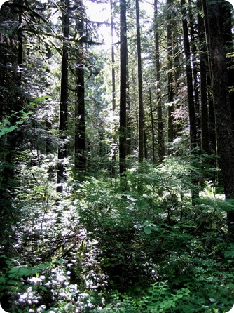 PacificNorthwestRainForest